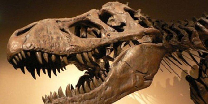 Bilim insanları, bu zamana kadarki en büyük dinozor fosilini keşfetti