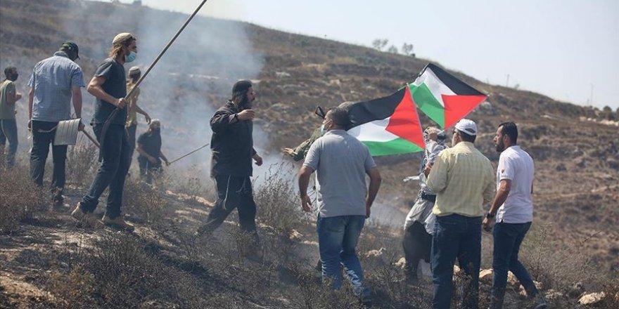 Yahudi yerleşimciler Filistinlilere ait yüzlerce üzüm ağacını söktü