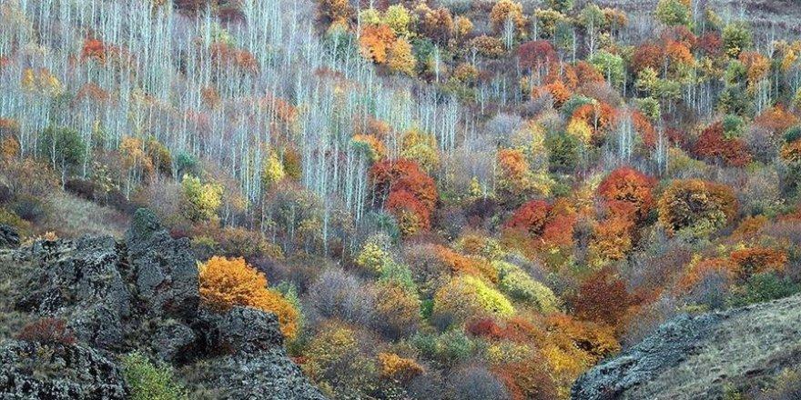 Ağrı dağlarındaki ağaçlarda sonbaharda renk cümbüşü yaşanıyor