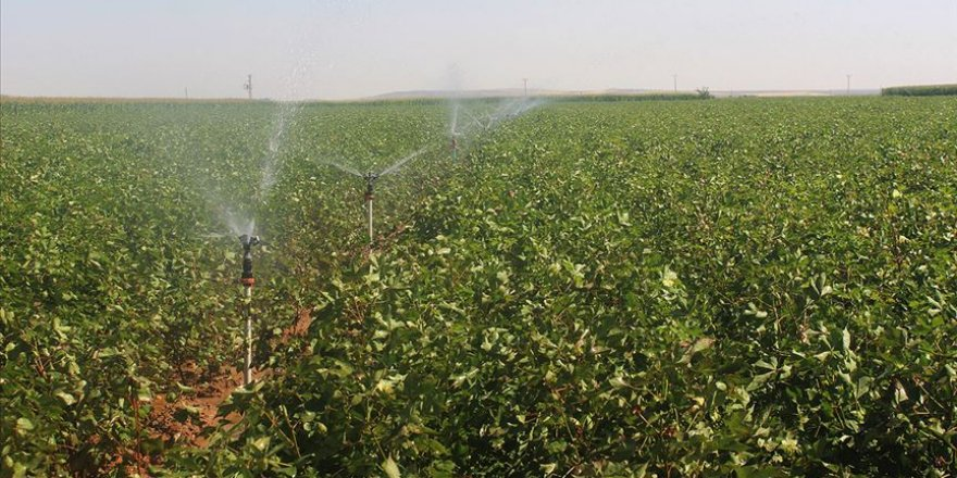 Bütçeden tarım ve sulamaya 57,5 milyar lira kaynak