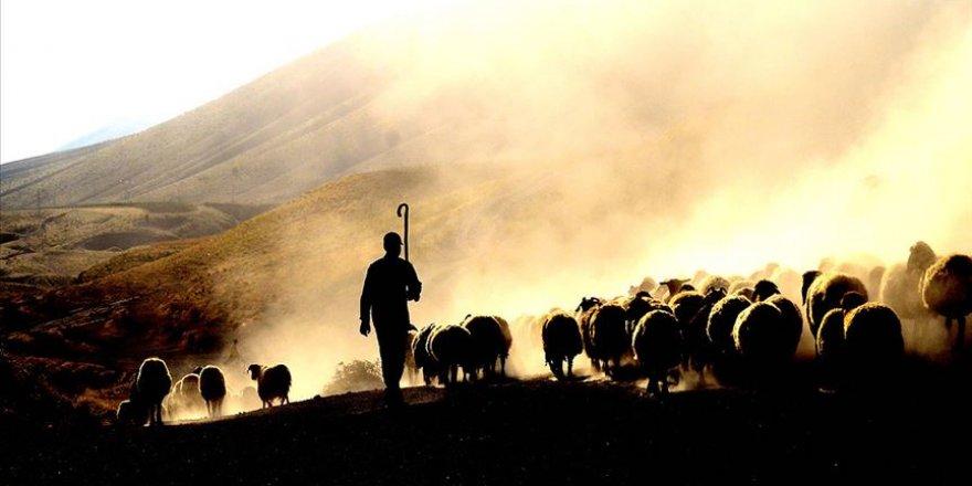 2020-2022 döneminde uygulanacak hayvancılık yatırım destekleri belirlendi