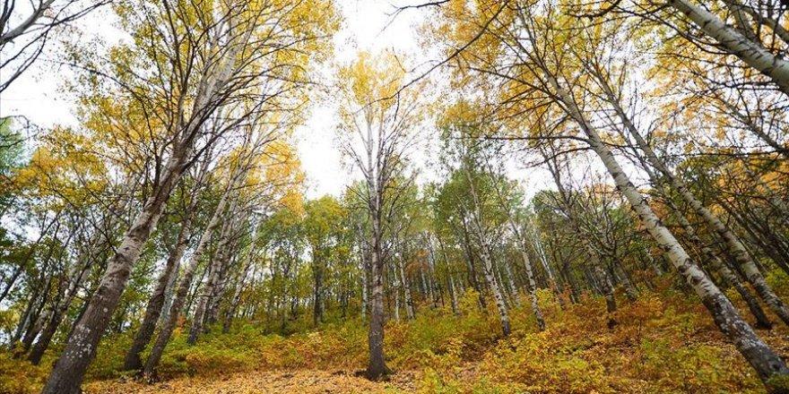 Doğaseverlerin sonbahardaki uğrak noktası: Salördek ormanları