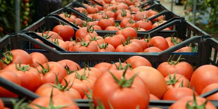 Kasımda en çok domatesin fiyatı arttı