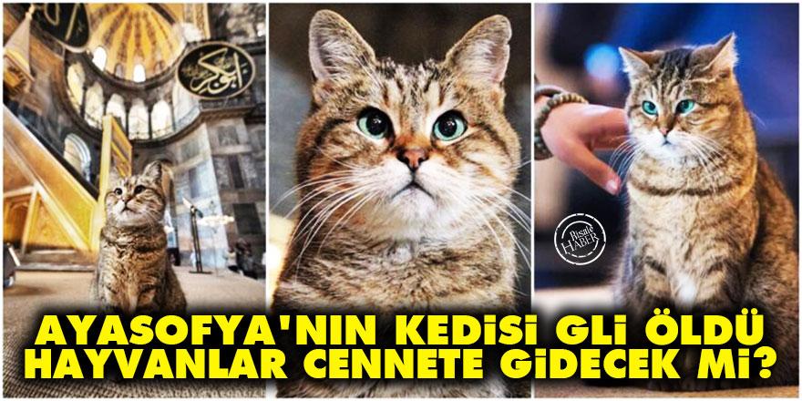 Ayasofya'nın kedisi Gli öldü, hayvanlar cennete gidecek mi?