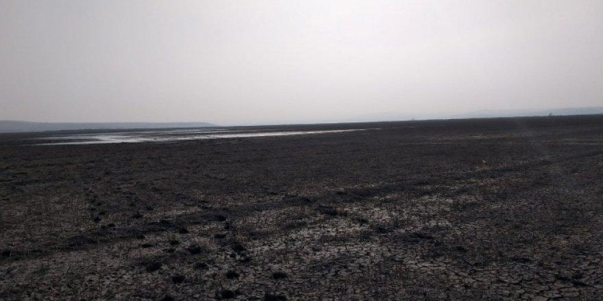 Baraj suyu çekildi, binlerce balık telef oldu
