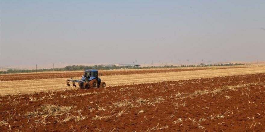 Türkiye'de bitkisel üretim değeri 2020'de yüzde 22,99 artışla 97,37 milyar lira oldu