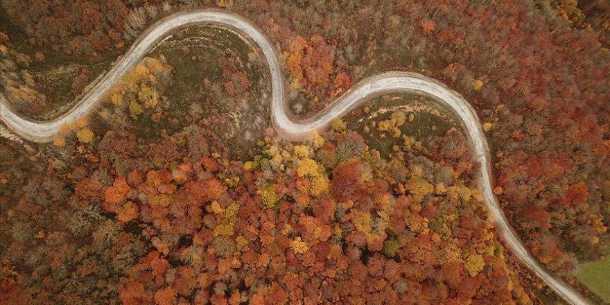 Istranca ormanlarında sonbaharın son demleri hayran bırakıyor