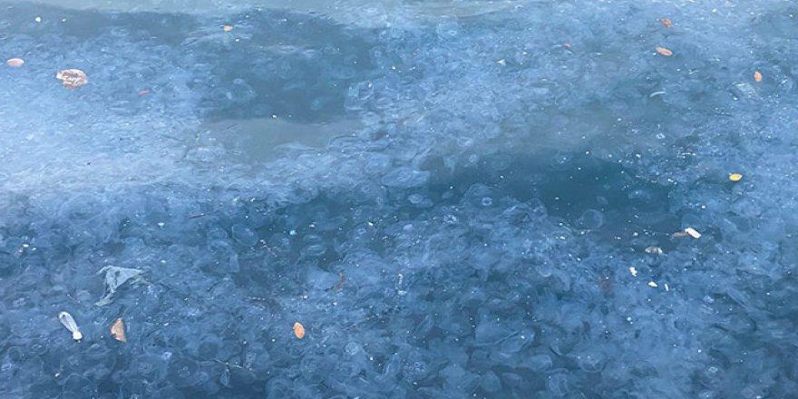 Üsküdar'da binlerce denizanası kıyıya vurdu