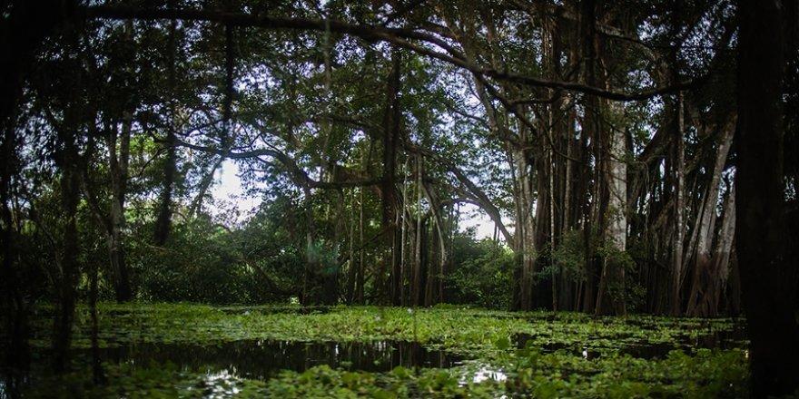Amazon yağmur ormanlarındaki kayıp 'son 12 yılın en yüksek seviyesine' çıktı