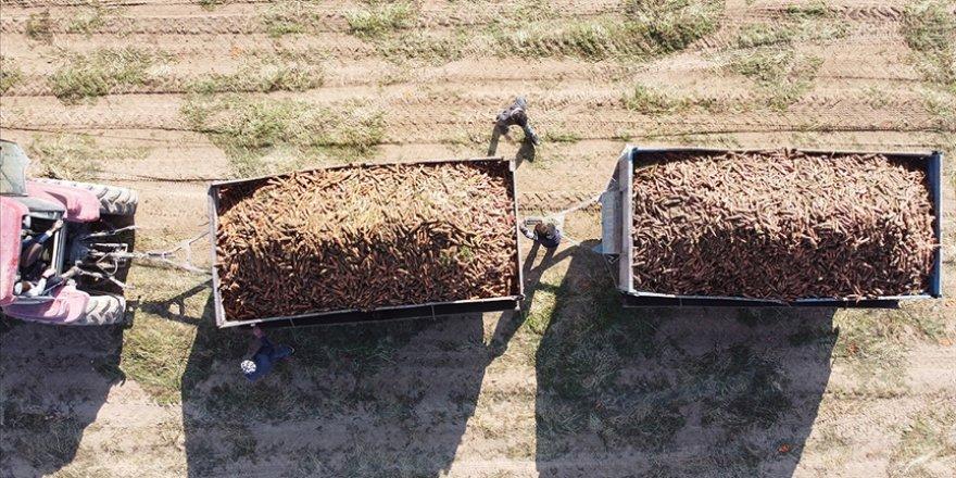 Türkiye'deki havucun yüzde 70'i Kaşınhanı'da üretiliyor