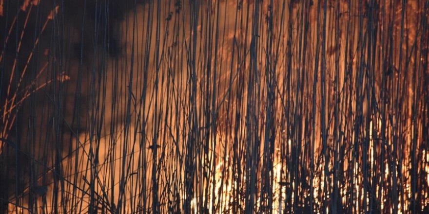 Eber Gölündeki yangında yaklaşık 600 dönüm kamışlık arazi zarar gördü