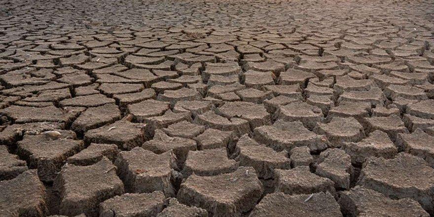 Son zamanlarda yaşanan kuraklık tarlalarda etkisini göstermeye başladı