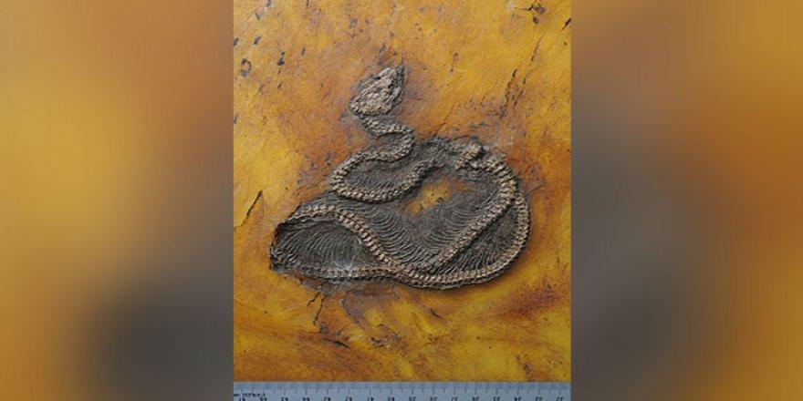 Dünyanın en eski piton yılanının kalıntıları keşfedildi