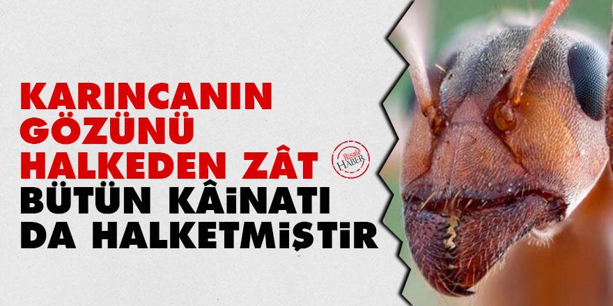 Bediüzzaman: Karıncanın gözünü halkeden zât, bütün kâinatı da halketmiştir