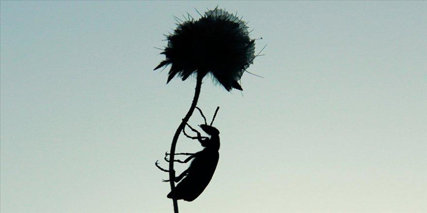 AB'den 'böcek yenebilir' görüşü