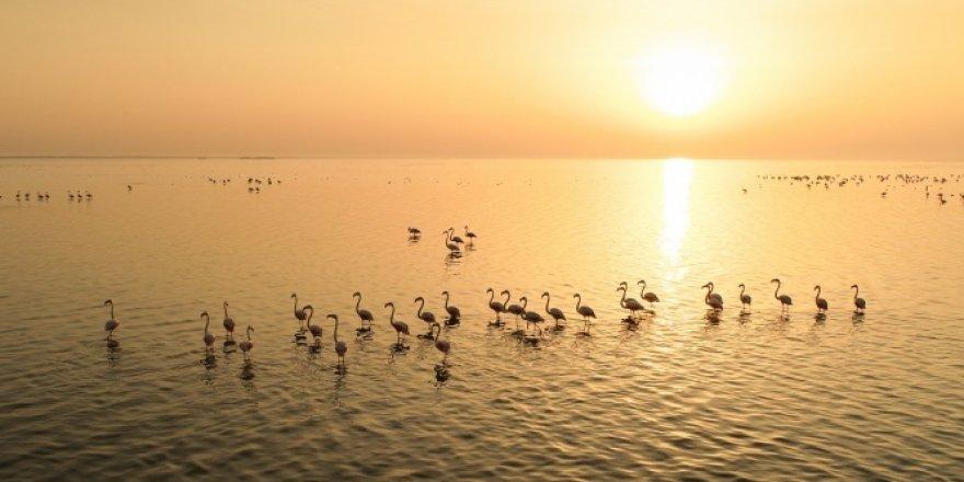 Akyatan Lagünü, hem flamingoları hem de fotoğrafseverleri ağırlıyor