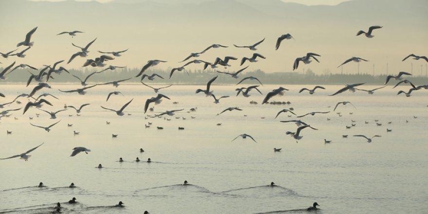 Flamingolar İzmit Körfezi'ni mesken tuttu