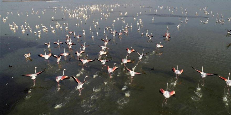 Türkülere konu olan allı turnalar Çukurova Deltası'nı 'renklendirdi'