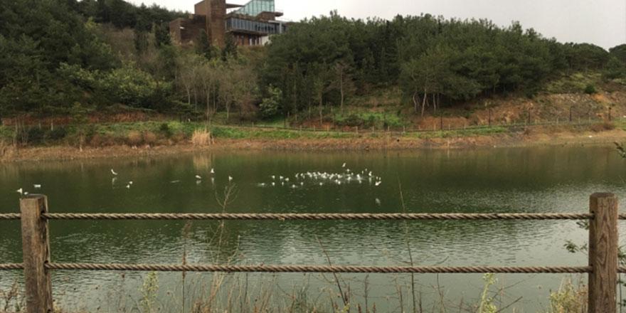 Kuraklık ve israfa karşı tedbir: Yağmur hasadı ve gri su kullanımı