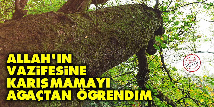Allah'ın vazifesine karışmamayı ağaçtan öğrendim