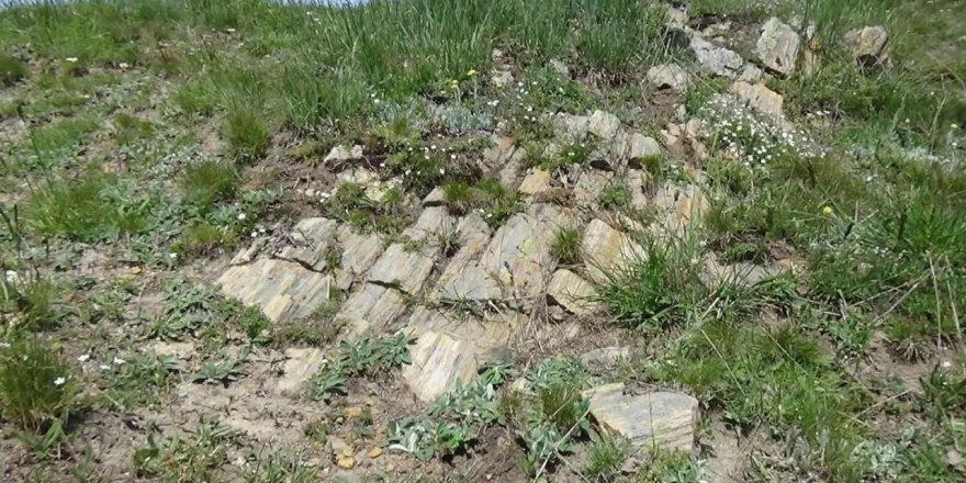 Gümüşhane'de dinozorların yaşadığı Jura dönemine ait fosiller bulundu