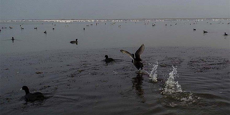 Göçmen kuşların uğrak durağı Çukurova Deltası misafirleriyle 'cıvıl cıvıl' oldu
