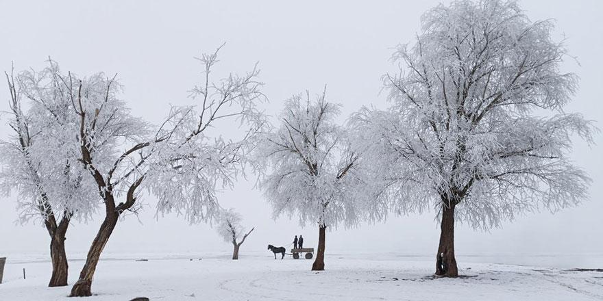 Kırağı tutan ağaçlar beyaza büründü