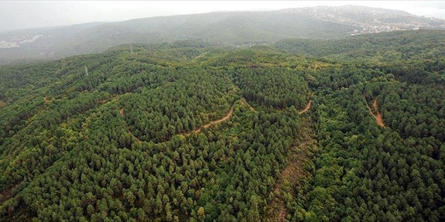 Dünya genelindeki ormanlık alanlar genişledi