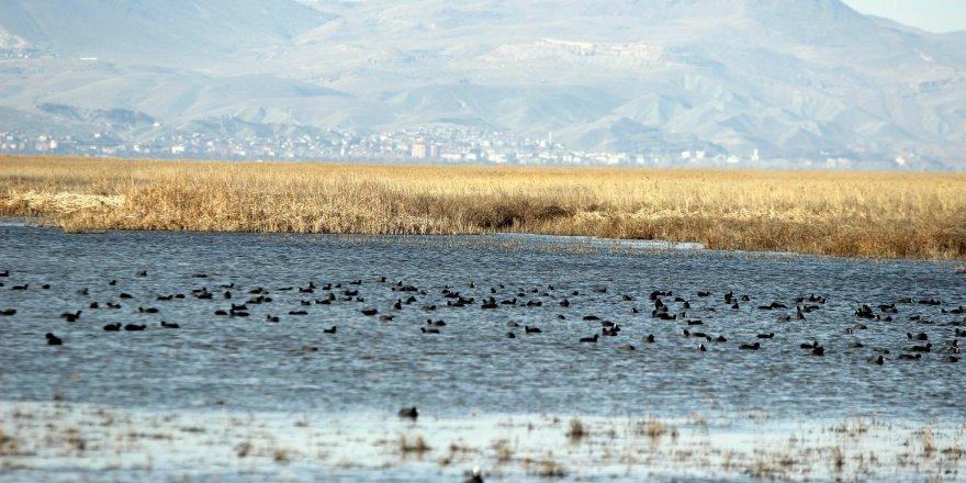 Kuş Cenneti'nde göç hareketliliği başladı