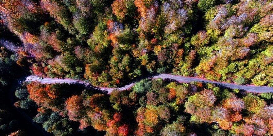 Hatay'da kurulacak 'turizm ormanı' için hedef 100 bin ağaç olarak belirlendi