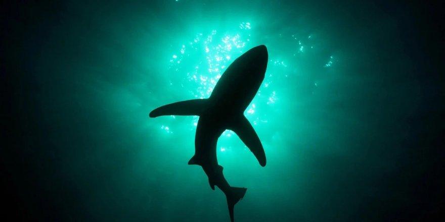 Subhanallah! Işık saçan dev köpek balığı keşfedildi