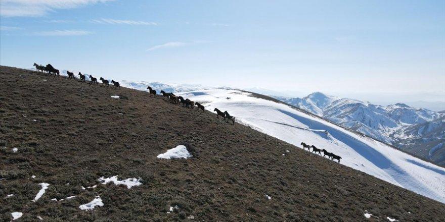 Emir Dağları'ndaki yılkı atları drone ile görüntülendi