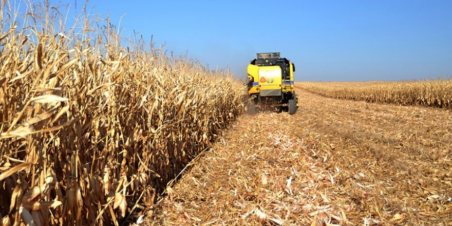 Tarım bünyesindeki 10 sektörün 8'iyle ihracatta atağa kalktı