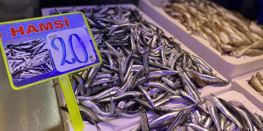 Trabzon'da yeni avlanan hamsinin kilogramı 20-30 liradan satılıyor