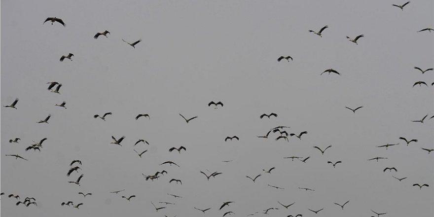Baharın gelişiyle göç eden leylekler Bilecik semalarında görsel şölen oluşturdu