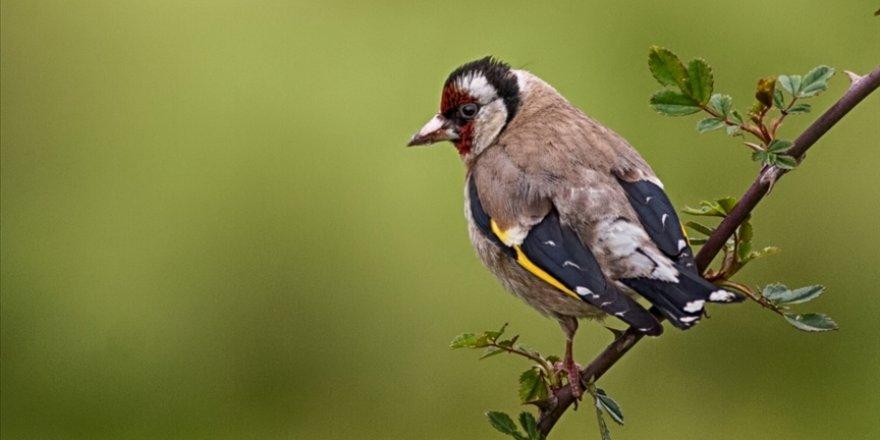Ballıkayalar'ın 'kuş dedektifi' 10 yıldır yaban hayatının izini sürüyor