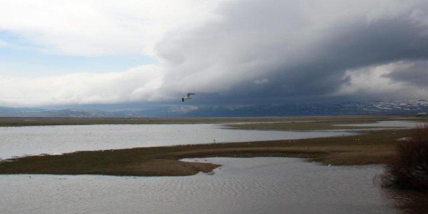 Kura Nehri eriyen kar ve sağanak nedeniyle taştı