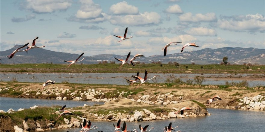 Gediz Deltası'ndaki kuş göçü hareketliliği kayıt altına alınıyor