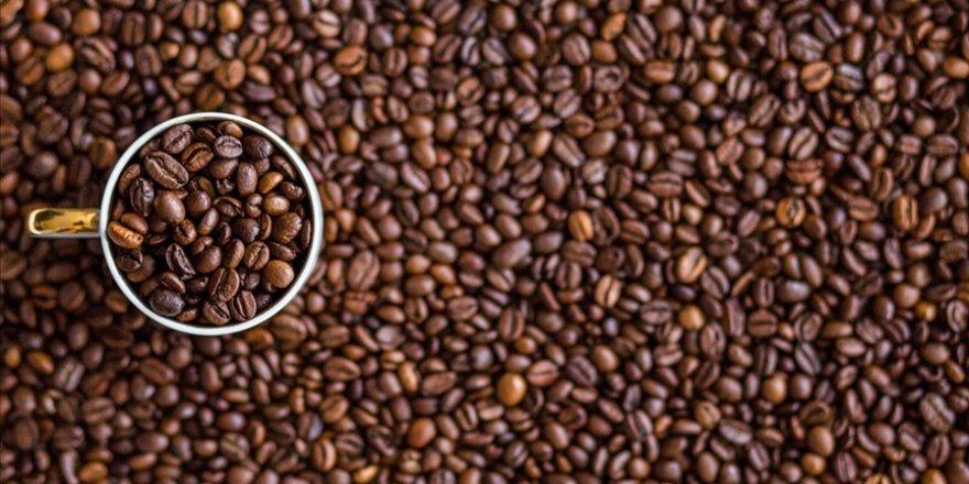 Batı Afrika'da iklim değişikliğinden etkilenmeyecek eski bir kahve türü bulundu