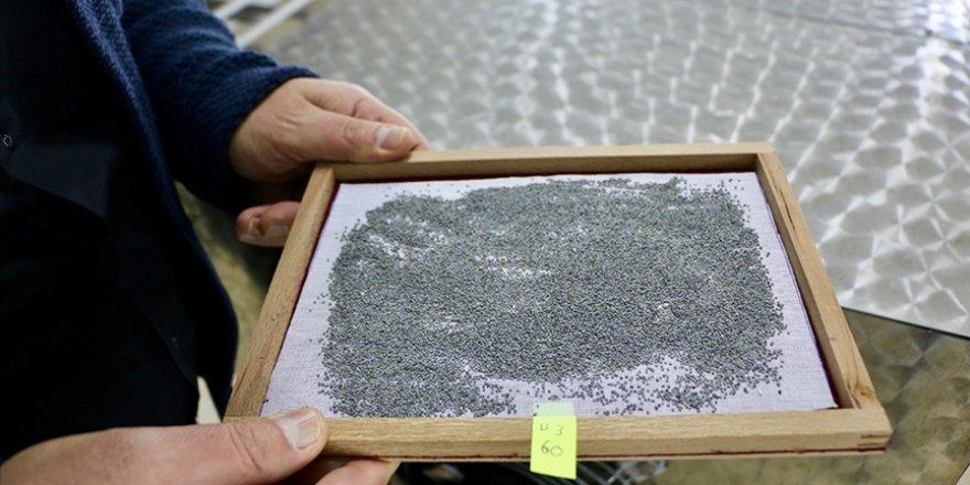 Eskişehir'de canlandırılan ipek böcekleri Türkiye'nin 60 kentinde koza örüyor