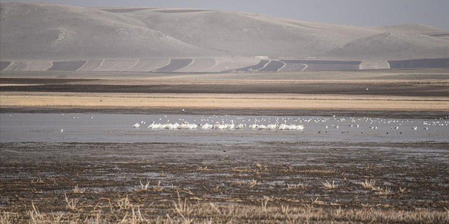 Kuş cenneti Kuyucuk Gölü ilkbaharda göçmen misafirleriyle şenlendi