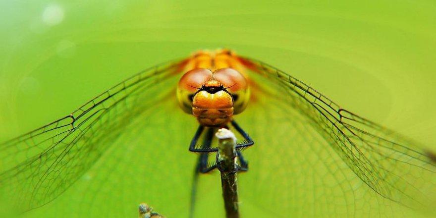 Yaratılış harikası Yusufçuk, yeni drone tasarımlarına ilham veriyor
