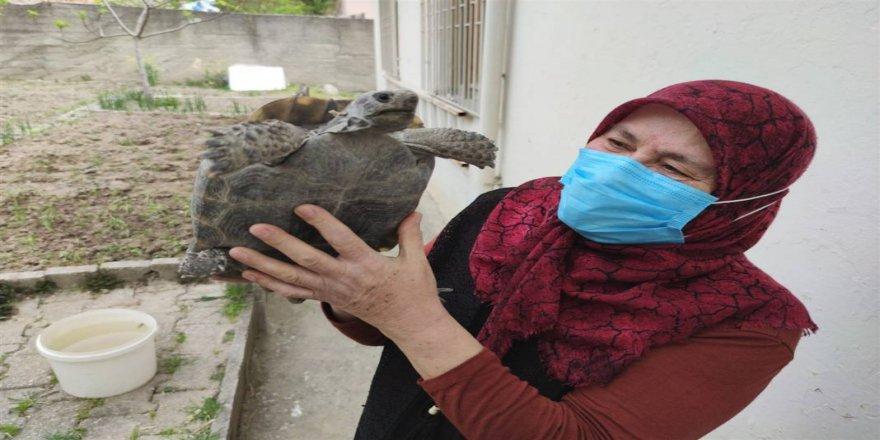 70 yaşındaki Zekiye teyze ile kaplumbağanın şaşırtan arkadaşlığı