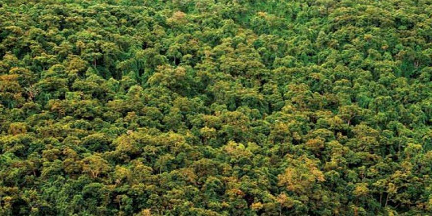 Dünya genelindeki ormanlık alanlar Fransa kadar genişledi