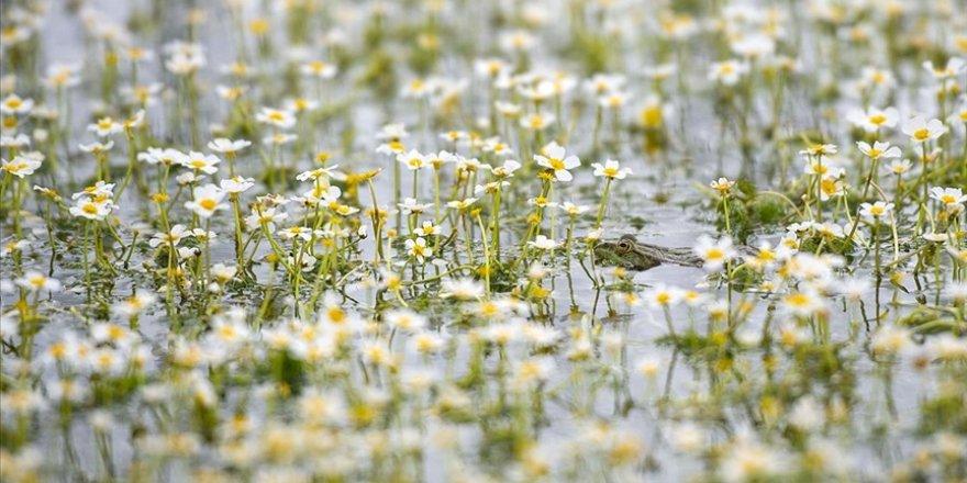 Doğası ve yaban hayatıyla dikkati çeken Tunceli'deki 'Sülüklü Göl' bahar renklerine büründü