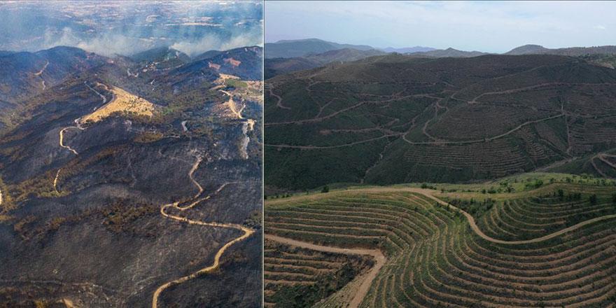İzmir'de 2 yıl önce yanan ormanlık alana 6 milyon 500 bin fidan dikildi