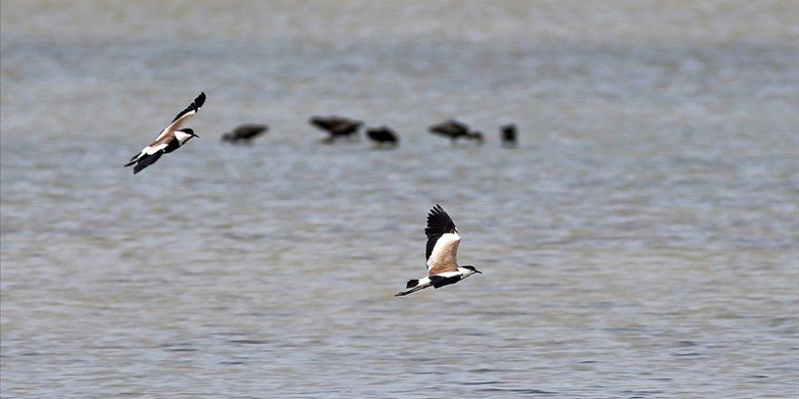 Dünya Göçmen Kuşlar Günü etkinliği kapsamında Türkiye'de 289 kuş türü gözlendi