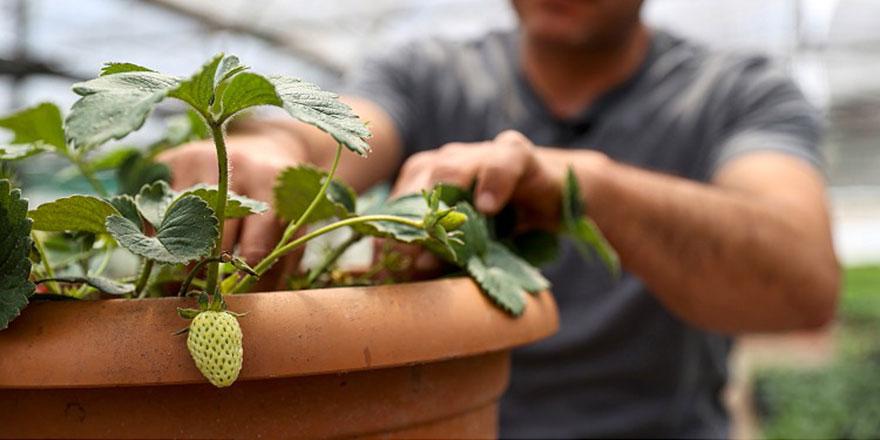 Balkonda sebze yetiştirmeye ilgi arttı