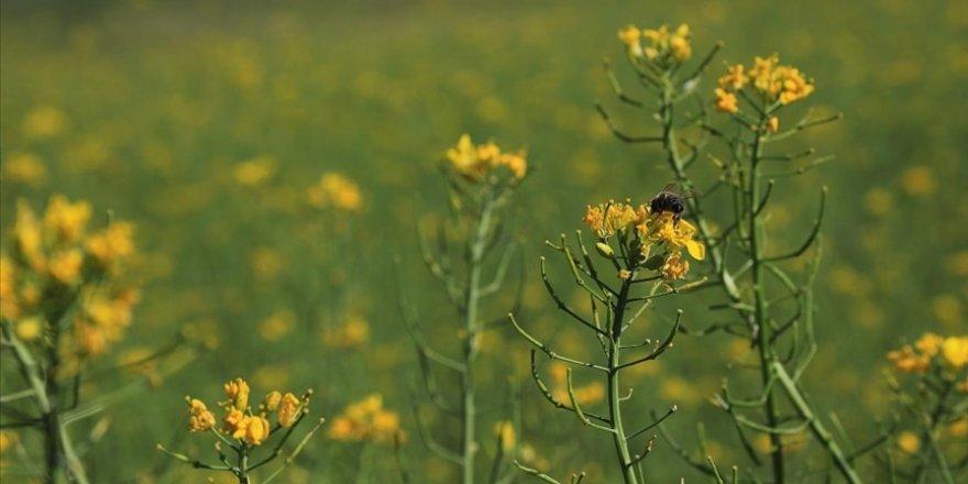 Bingöl Üniversitesi sağlıklı bal için arı merası oluşturdu