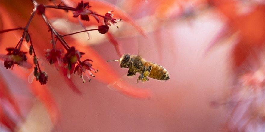 Bilinçsiz zirai ilaç kullanımı Türkiye'de arı kayıplarını artırdı